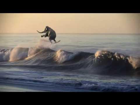 A Must See - A Surfing Elephant!