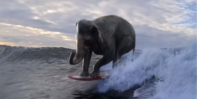 El surf en el mundo de la publicidad